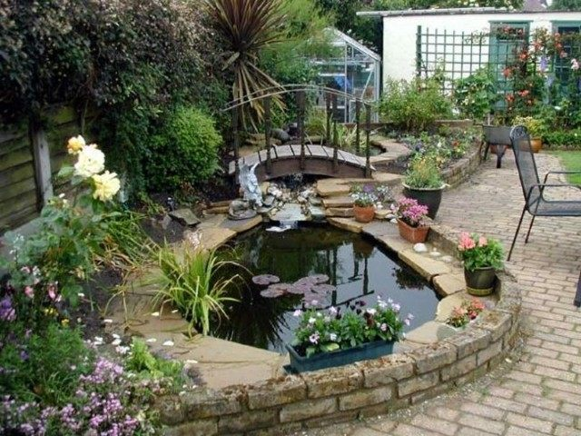 estanque jardin plantas acuáticas varias