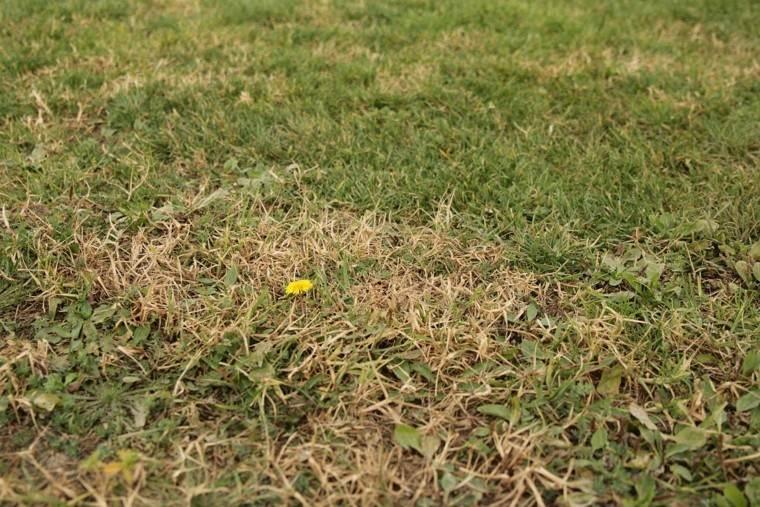 hierba jardin hierbajos secos flor