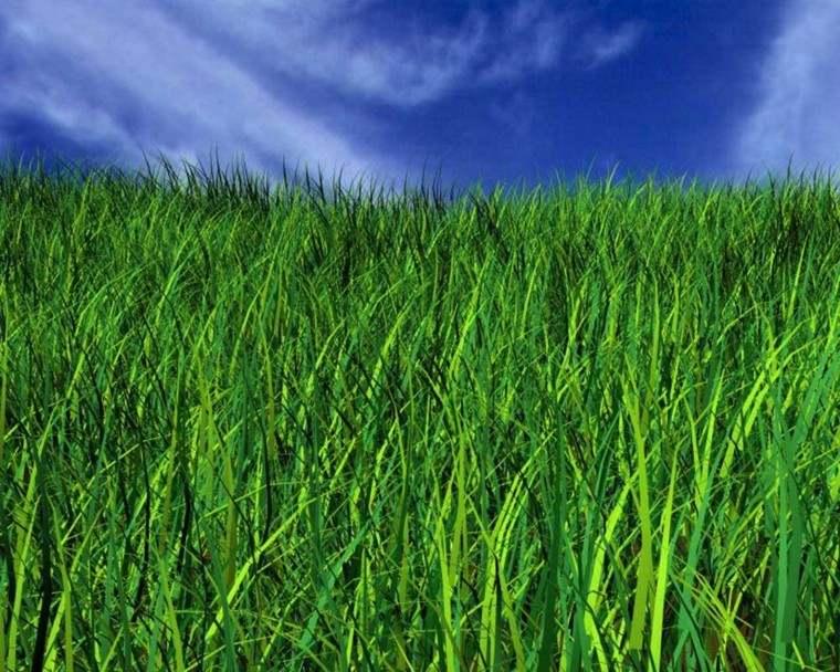 hierba verde mantenimiento jardin cielo