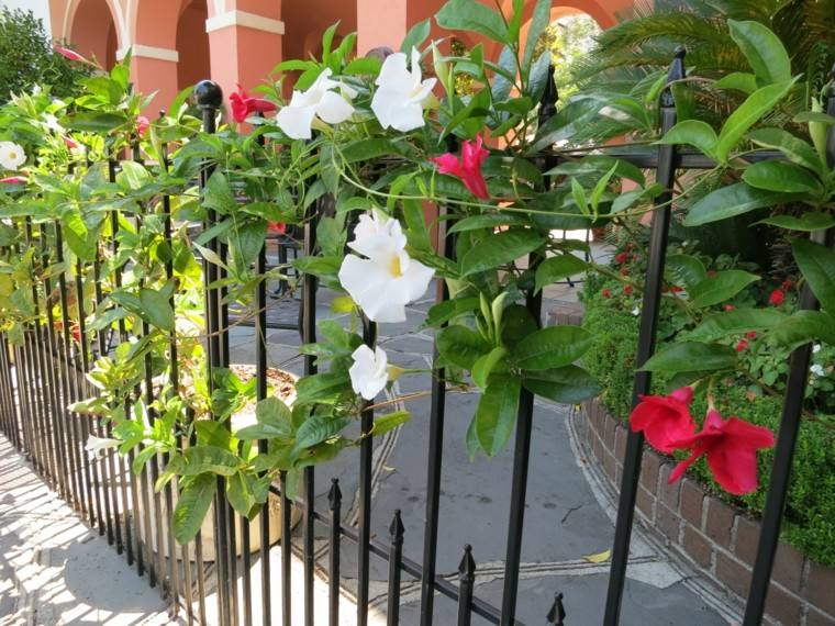 ideas flores trepadoras vallas jardin bonito moderno