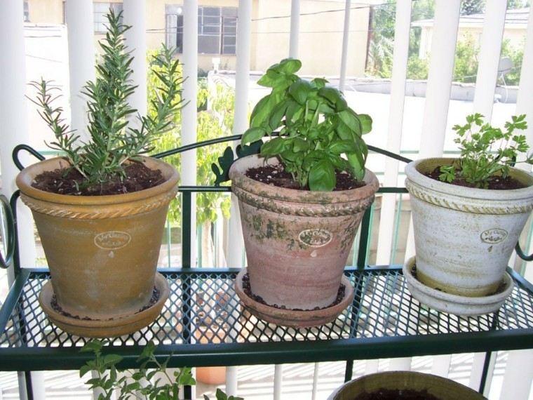 macetas barro grandes hierbas aromáticas