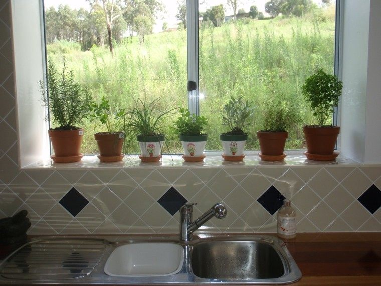 Especias naturales cultivadas en macetas de interior - Macetas para cocina ...