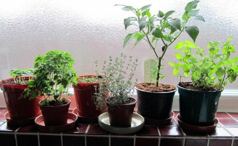 macetas varias plantas hierbas aromáticas