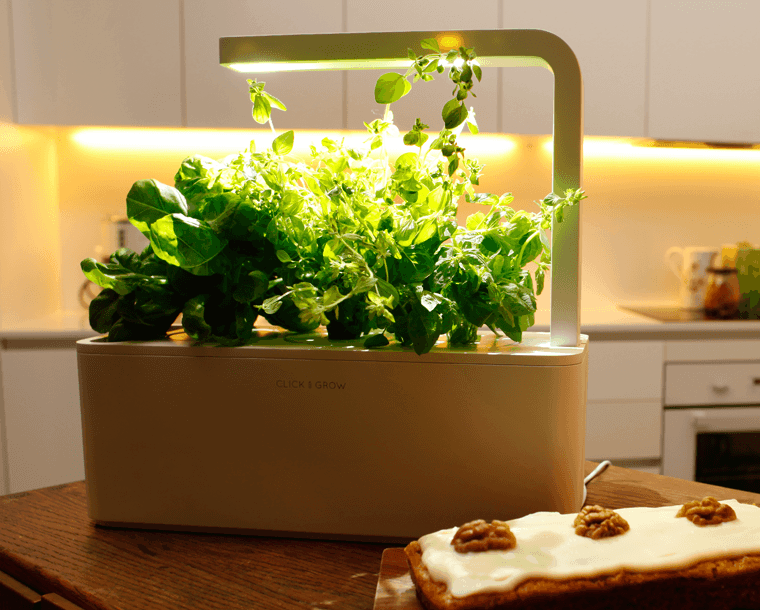 Especias naturales cultivadas en macetas de interior - Jardineras para interiores ...