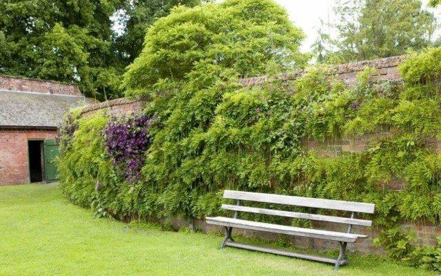 muro jardín plantas enredaderas banco