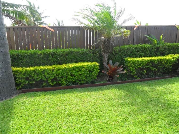 parcela jardin palmera hierba plantas