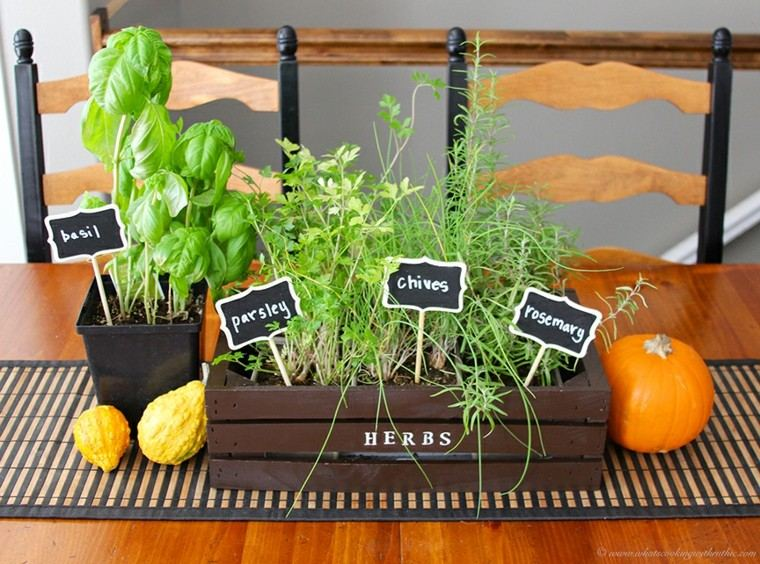 Especias naturales cultivadas en macetas de interior for Cultivo de plantas aromaticas y especias