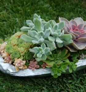 Ideas f ciles de paisajismo decora tu jard n de forma for Jardines decoraciones plantas