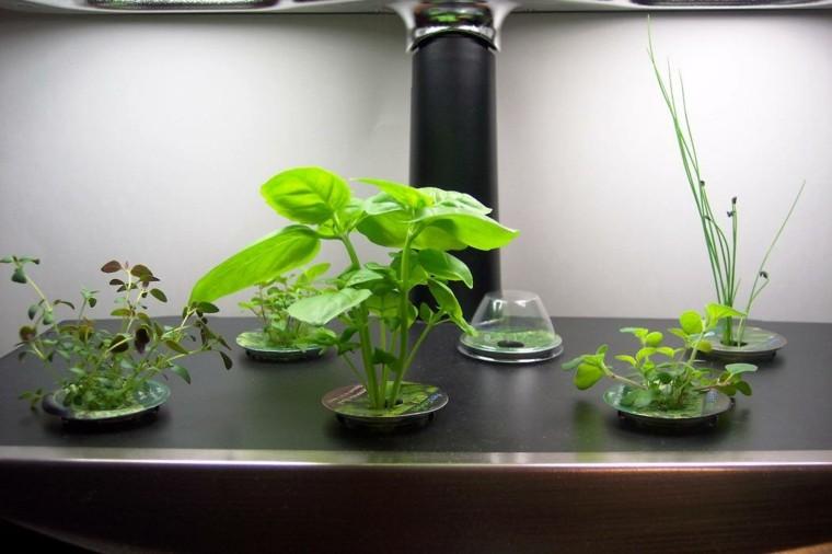 plantas especias cultivadas discos interior