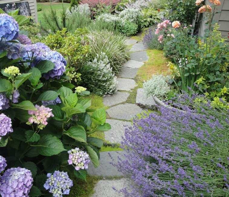camino escondido plantas color lila