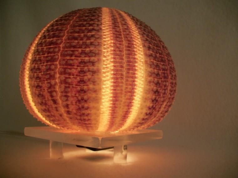 erizo grande lampara base madera