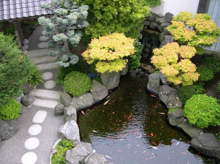 estanque koi camino piedras jardín