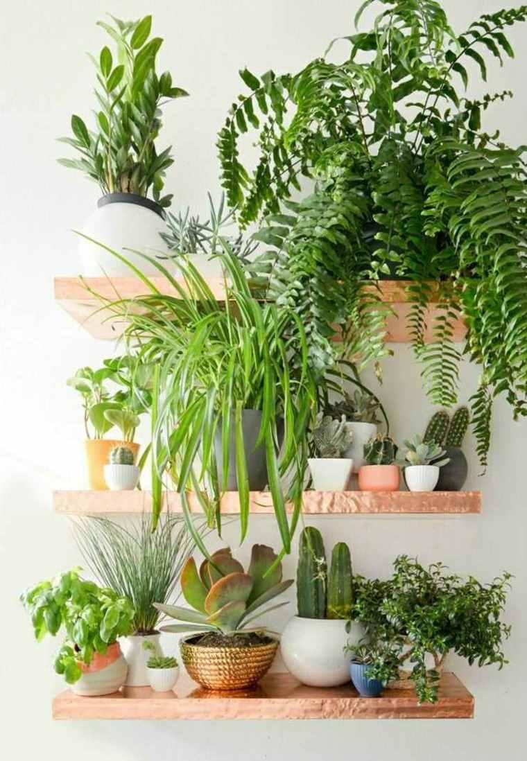 estante dorado interior plantas helechos