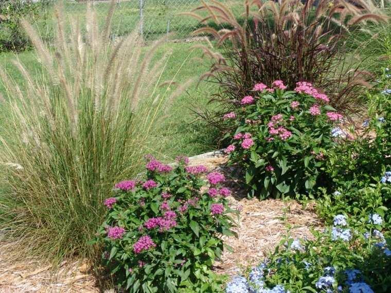 flores colorido mantillo jardin floracion