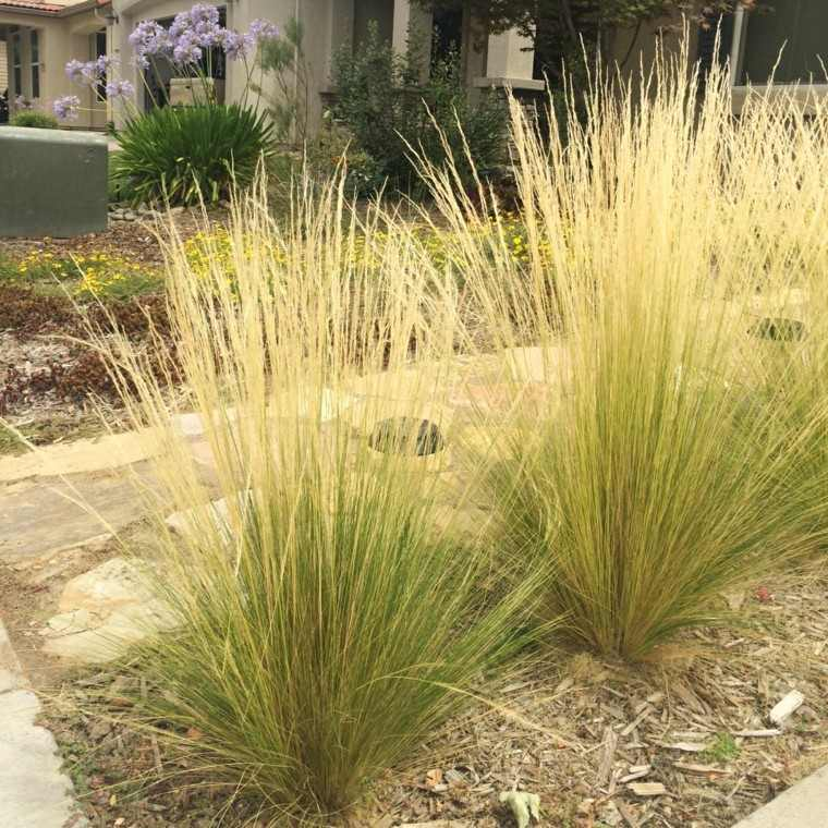 Hierbas ornamentales lo que hace diferente tu jard n for Ornamental grass that looks like wheat