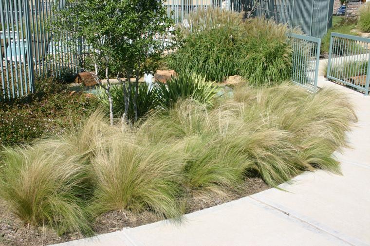 hierbas mexicana dorada verde sendero
