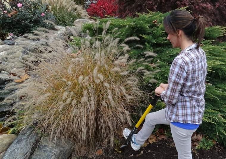 hierbas mujer trabajo patio jardineria