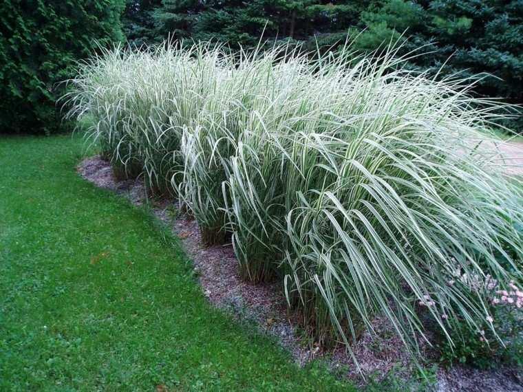 hierbas plateadas altas suelo mantillo