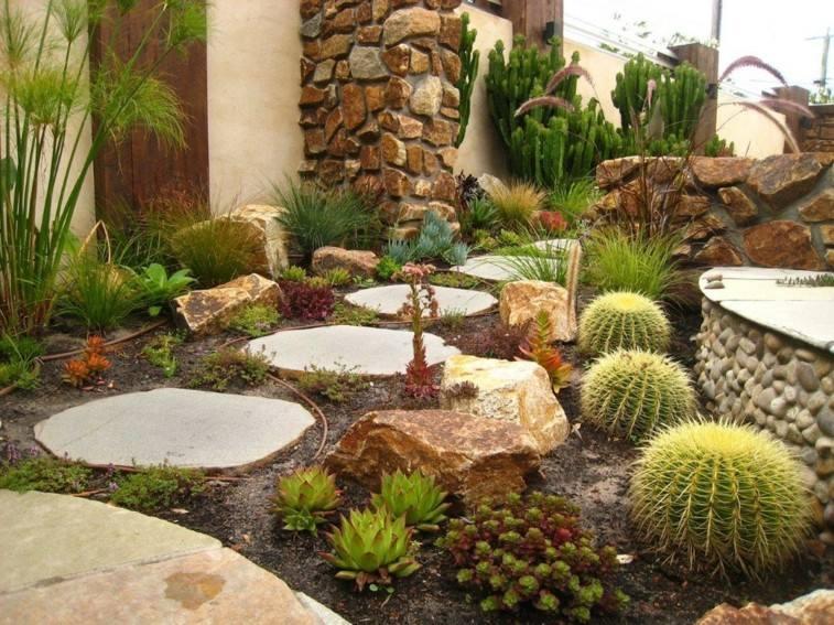jardin plantas secano cactus camino