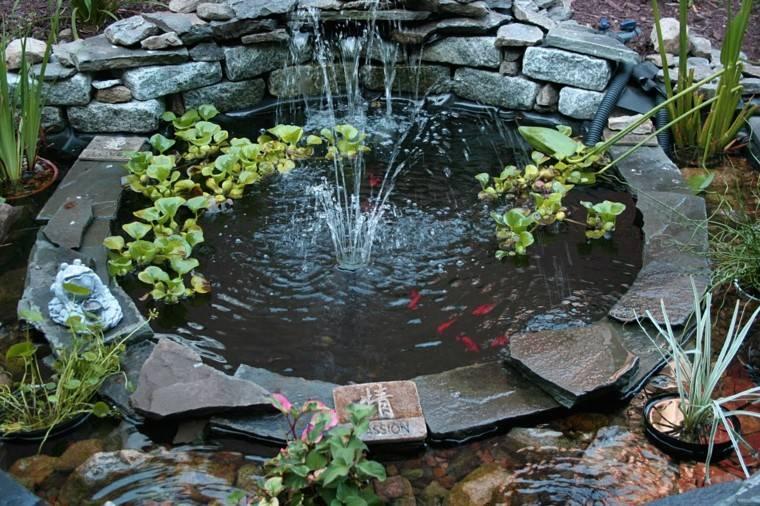 jardines diseño plantas peces coloridos