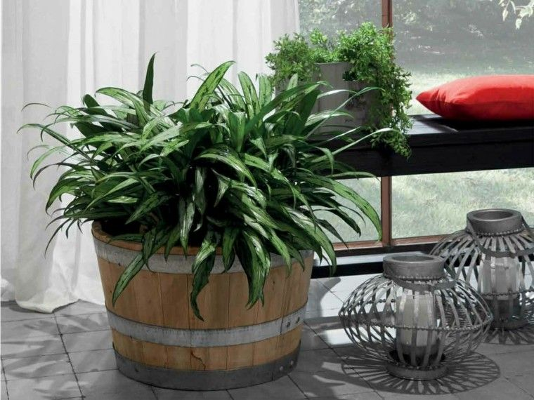 maceta grande plantas patio madera ideas