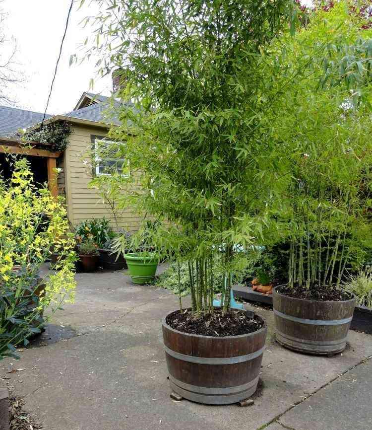 Cañas de bambú para decorar patios y terrazas