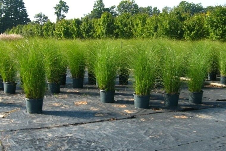 macetas hierbas jardin cultivos ornamentales