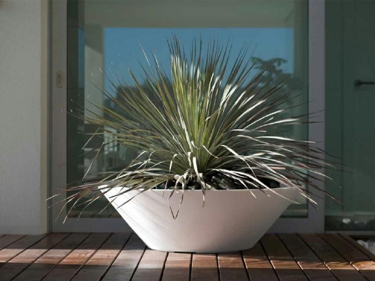 Macetas jardineras y plantas preciosas en el jard n - Cactus en macetas pequenas ...