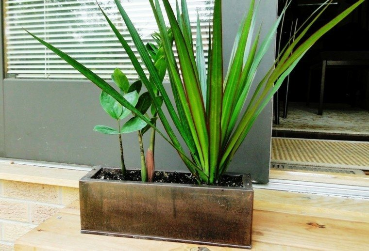 plantas preciosas macetas decorando jardin ideas