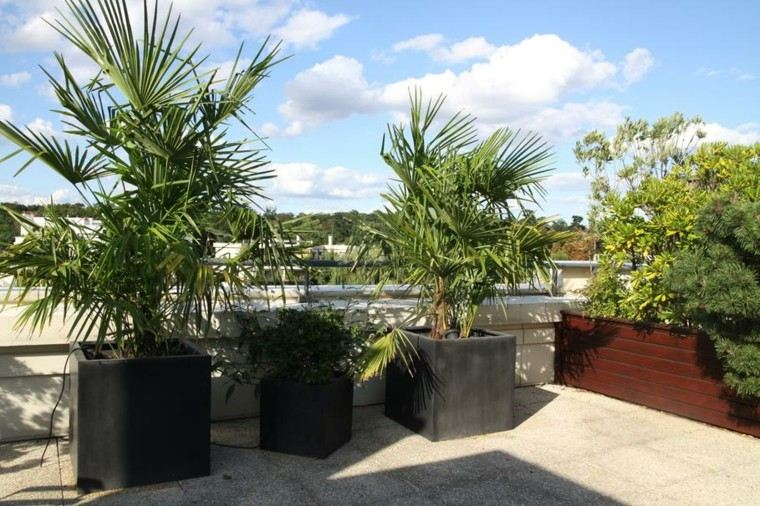 Terraza 50 ideas incre bles para decorarla con plantas for Palmeras decorativas exterior