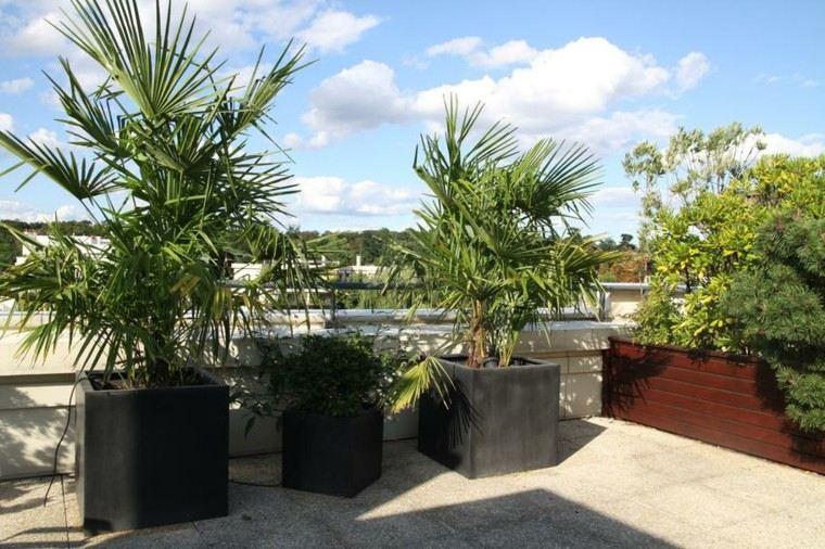 Terraza 50 ideas incre bles para decorarla con plantas - Plantas de exterior para terrazas ...