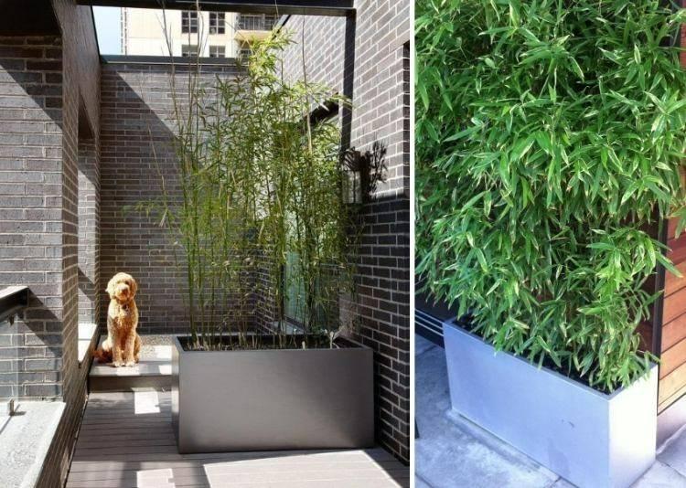 perro esquina maceta caña bambu