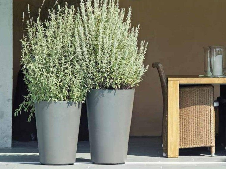 Plantas ornamentales jard n natural ideas preciosas - Macetas pared exterior ...