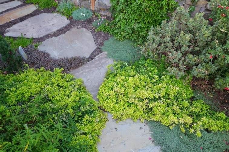 plantas naturales camino rocas sendero