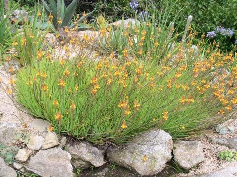 rocalla hierba creciendo color verde
