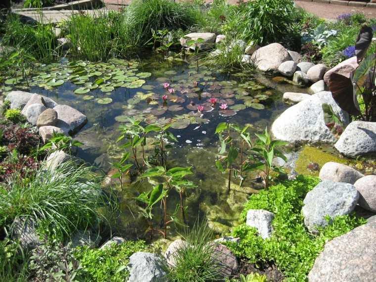 rocas plantas estanque flores acuaticas especies