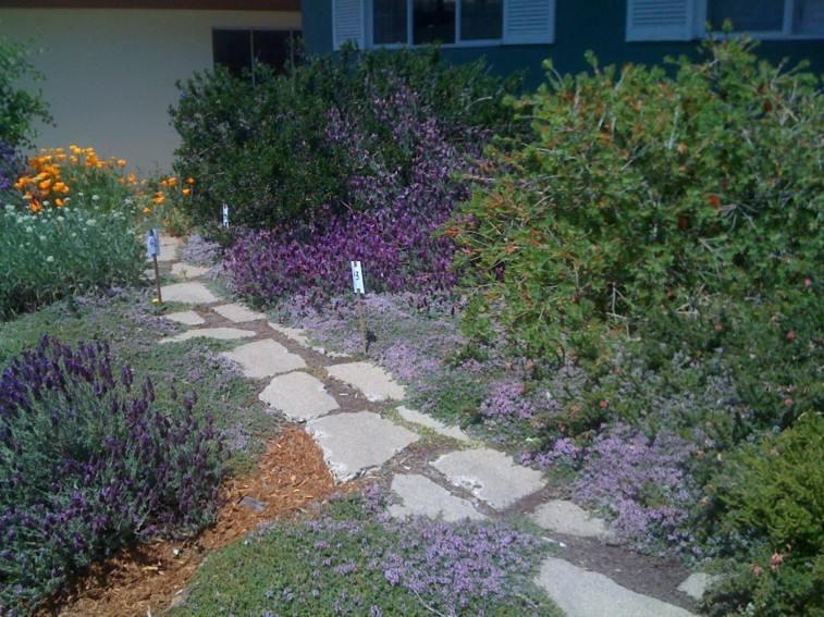 senderos piedra flores moradas jardin