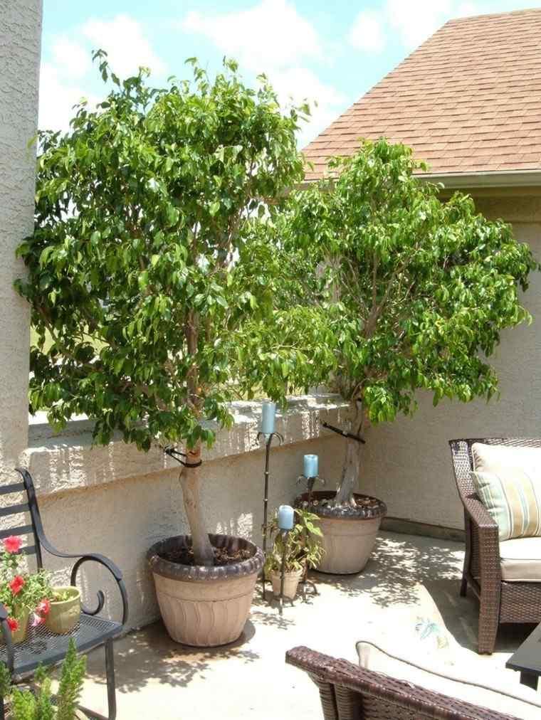 Terraza 50 ideas incre bles para decorarla con plantas - Cortavientos terraza ...