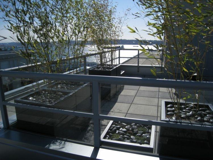 terraza moderna transparente plantas bambu