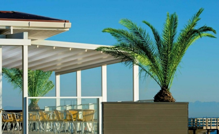 toldos pergolas terraza maceta grande palmera ideas