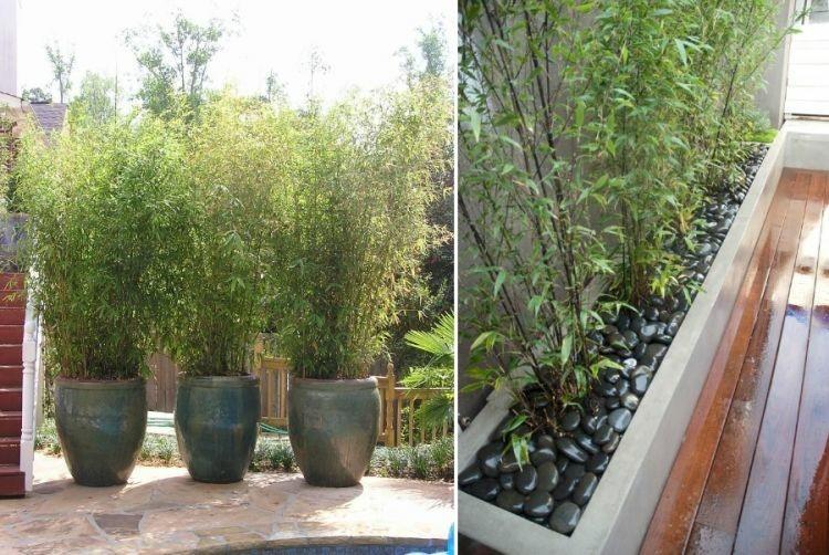 tres macetas caña bambú piedras