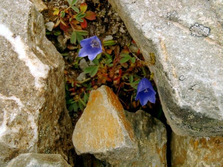 azul detalle planta rayas pequeño
