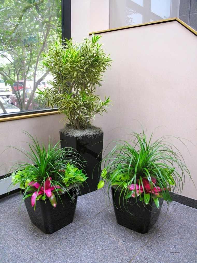 colorido plantas macetas oscuras flores