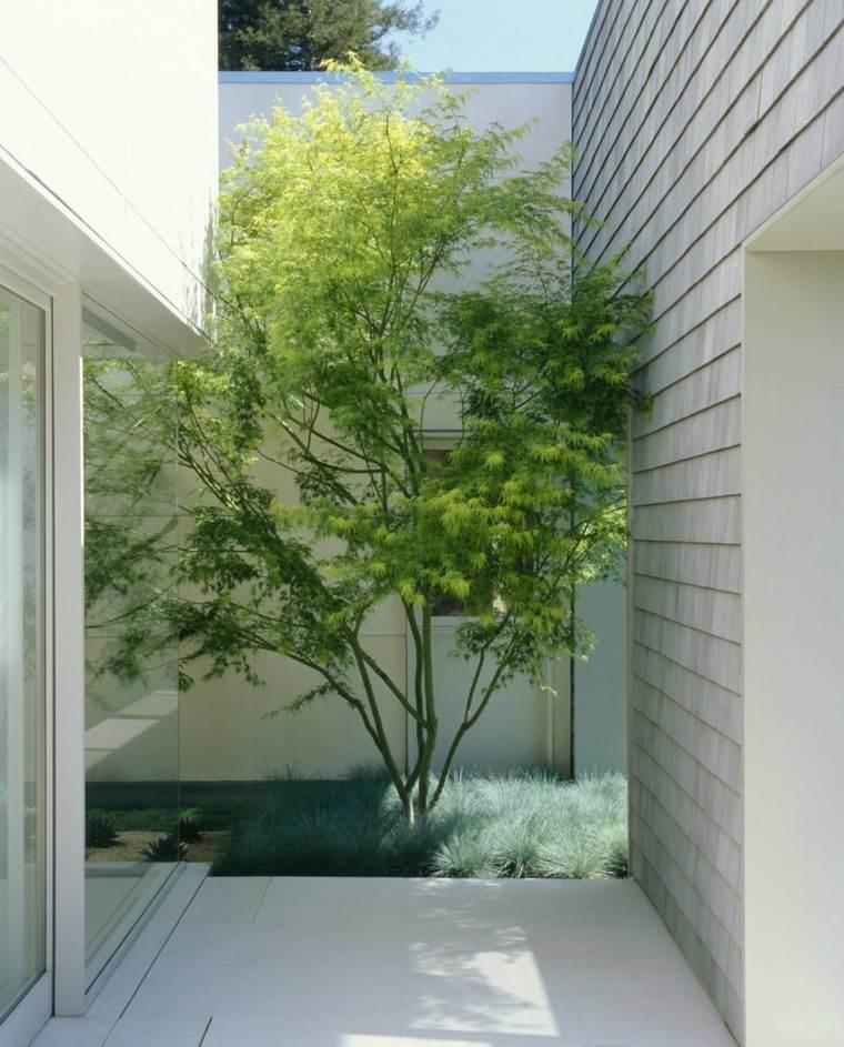 jardin interior plantas arbol