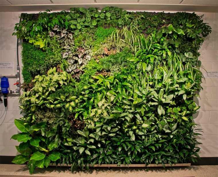 jardines diseño vertical australia pared bomba
