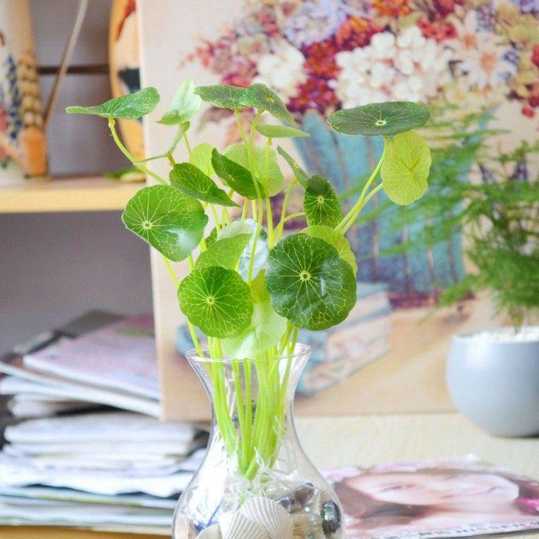 jarron planta dinero cristal florero