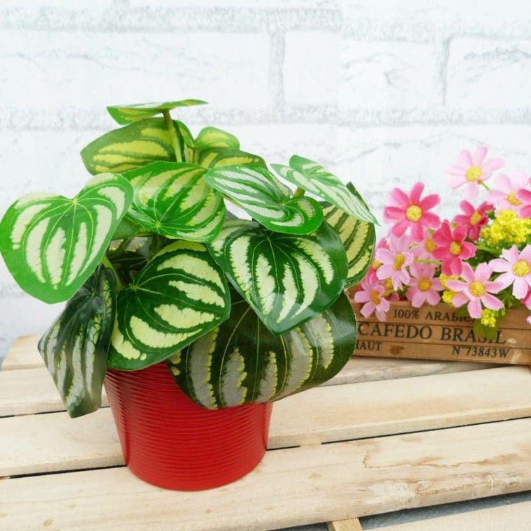 las plantas decoracion maceta diy