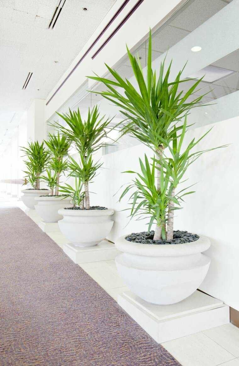 las plantas moderno espacio blanco