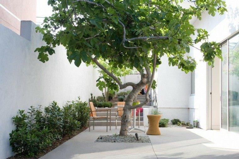 Espacio para jardines peque os 75 dise os impresionantes for Arboles para jardines pequenos