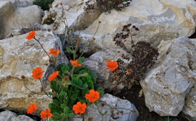 naranja rocas blancas estilo piedras